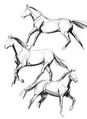 horses26