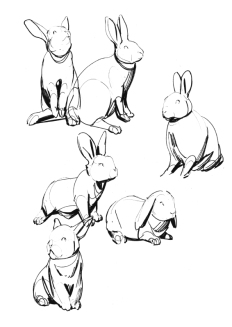 rabbits4