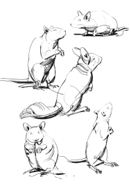 rodents1